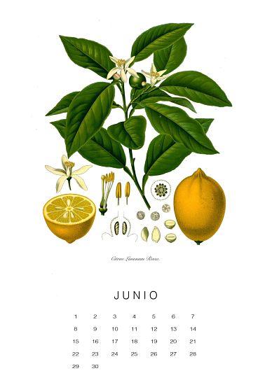calendario-planthae6