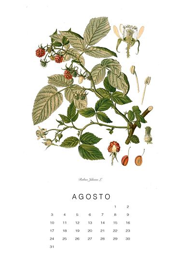 calendario-planthae8