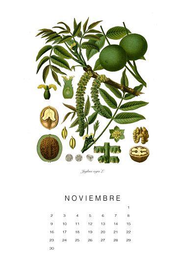 calendario-planthae11