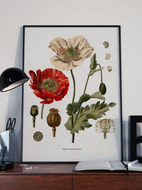 lamina botanica
